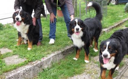Merlin au centre avec Nesko à G et Lilly à D