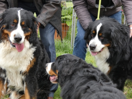 Merlin à droite avec Nesko et Lilly