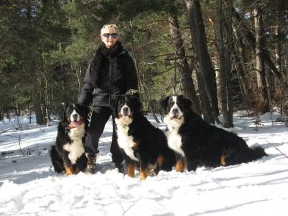 chiens-neige-loubaresse-2015- 7 ans et demie