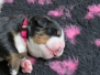 femelle rose-Molly Mia