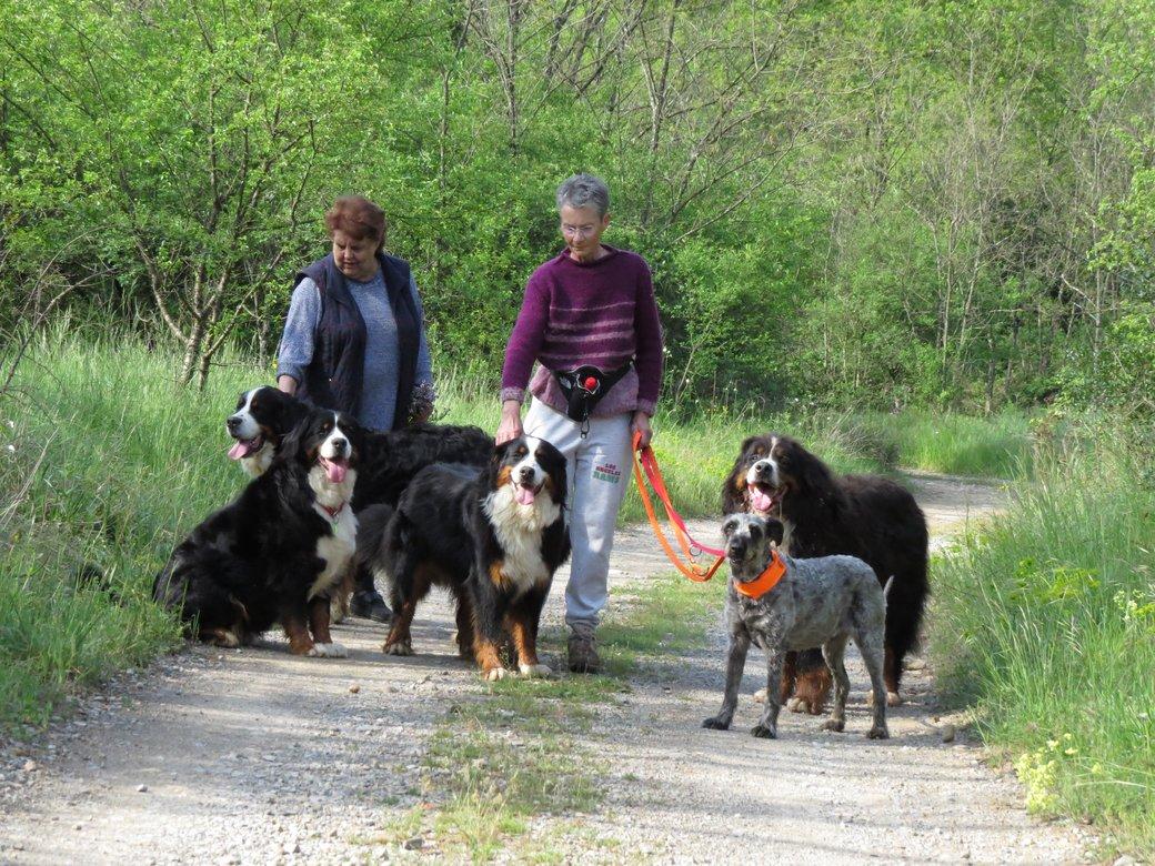balade-chiens-ligne-mai-2013-200