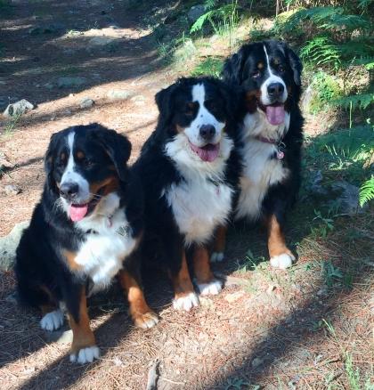 IMG_1178-la triplette