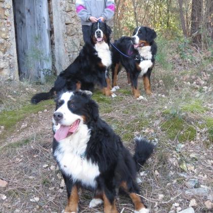 IMG_7137 la triplette