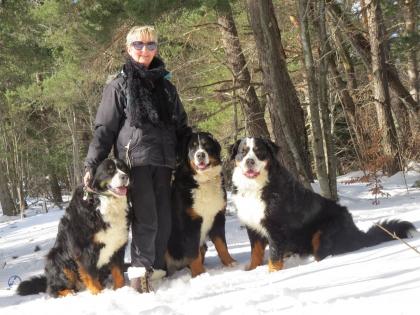 chiens-neige-loubaresse-2015-