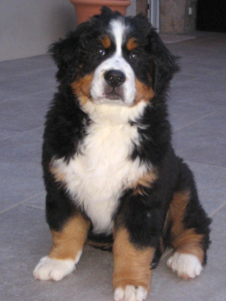 Horace - 2 mois et demie