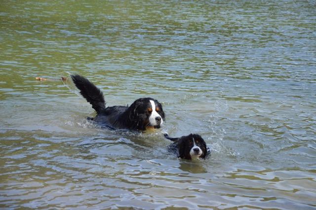 Molly-Mia et son compagnon Helko