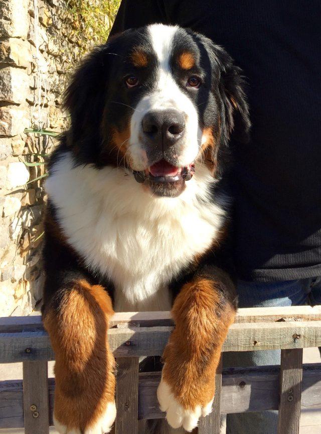 Merlin de la Tour de Brison 7,5 mois