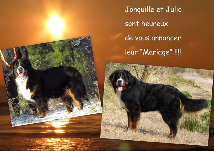 Jonquille et Julio
