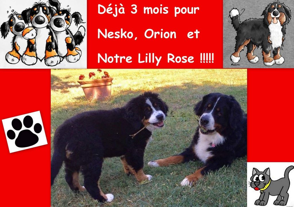 Lilly Rose 3 mois et sa maman Jonquille
